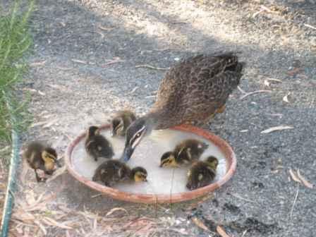 duckasup.jpg