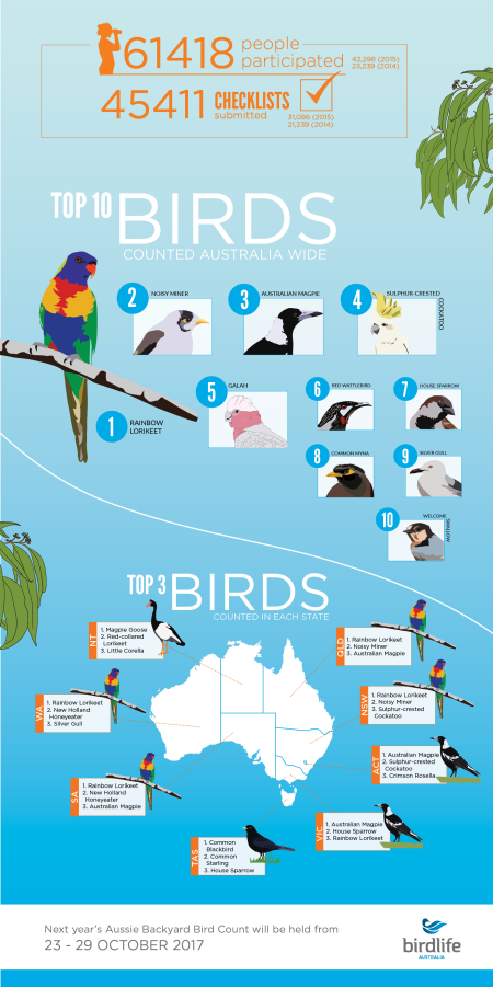 bird-count-infographic2